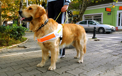 Service Animals, Emotional Support Animals, Pets and The Law